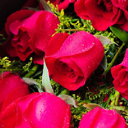 上海绿萝花艺9支玫瑰+百合/快乐每一天