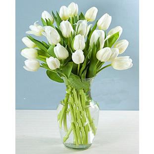 温州168鲜花19支白色郁金香高贵的心