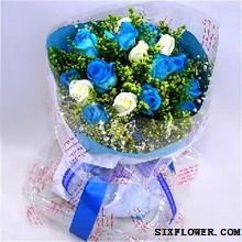 11支蓝色妖姬_今生爱你胶州花之缘鲜花