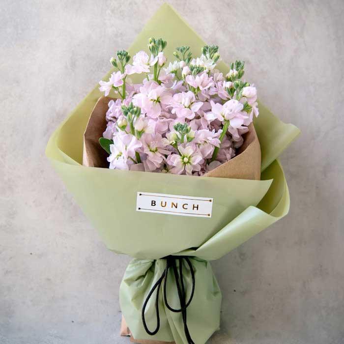 上海青浦绿图花卉园艺场萦绕不去的你/紫罗兰