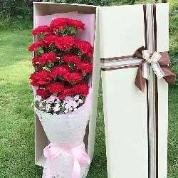 感谢有您/18枝红色康乃馨礼盒