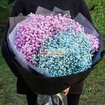 心雨花行一生相随/粉色+蓝色满天星