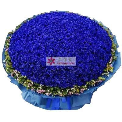 富阳百草园花艺为你付出所有/520枝蓝玫瑰