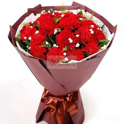 18朵红色康乃馨,照亮您的心房上海兰兰花店