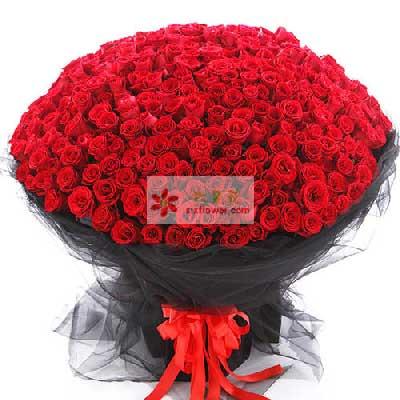 520朵红玫瑰,久久的相伴深圳龙岗无忧花坊