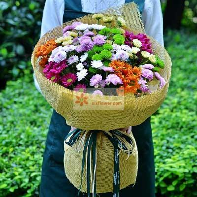 小玉鲜花批发各色雏菊一大扎,感悟人生