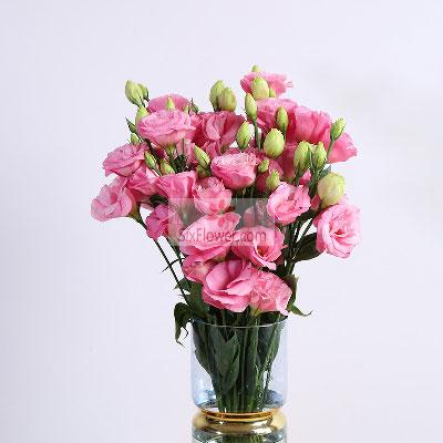 晟佰棠花艺店30朵粉色桔梗,瓶插花,甜蜜蜜属于你