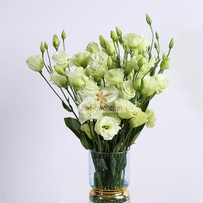 30朵绿色桔梗,永远都醒目大连永合鲜花礼仪