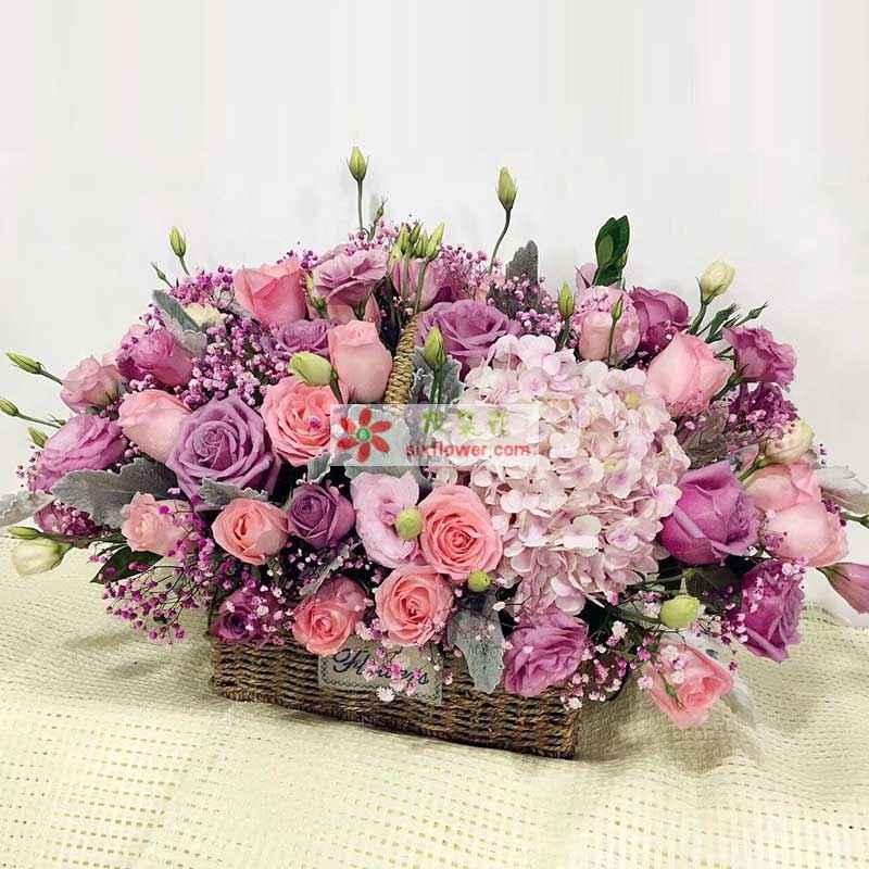 19枝粉色玫瑰,19枝紫色玫瑰,1只粉色绣球,粉色满天星,桔梗丰满