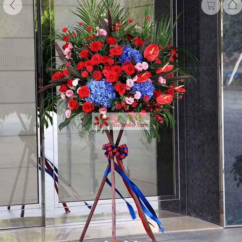 29枝红色玫瑰,29枝红色康乃馨,5枝红掌,3只蓝色绣球花,15桔梗(粉色或绿色),红色小花搭配